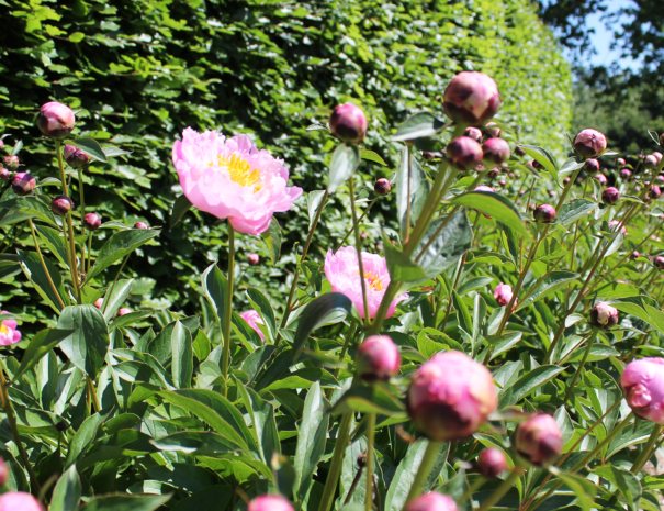 Blomster_1920x1080