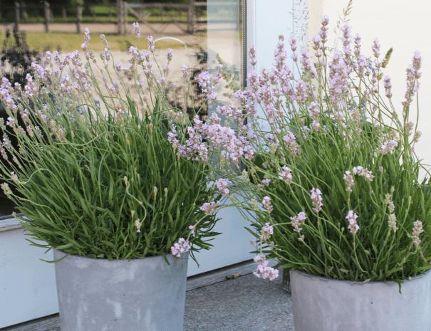Blomster_på_terrassen_1200x1080